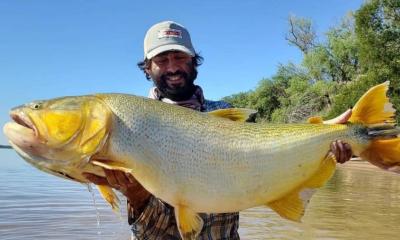Corrientes: pescan dorado récord en el río Paraná