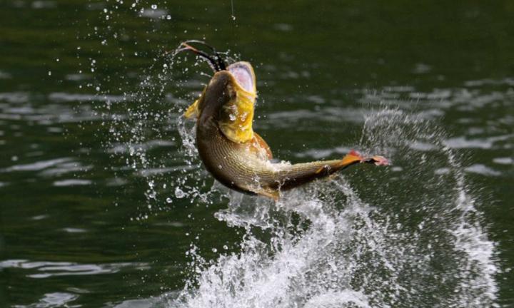 Pesca-dorado (1).jpg