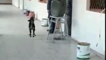 Perrito canta Aurora en una escuela de San Luis del Palmar