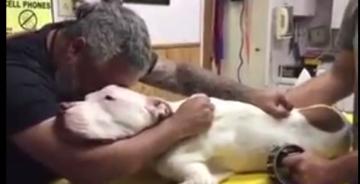 Hombre se despide de su perro antes de morir y se hace viral.jpg