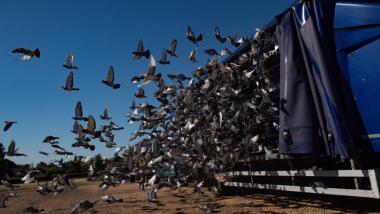 carrera-palomas.jpg