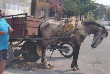 caballo rescatado (1).jpg
