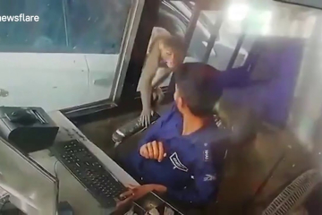 Cheeky monkey caught on camera stealing money from toll booth worker in northern Indi