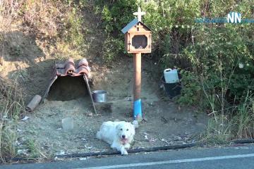 Ναυπακτία- Γαβρολίμνη: Ο σκύλος βρήκε στέγη δίπλα στο εικόνισμα  για το  αφεντικό του.Βίντεο