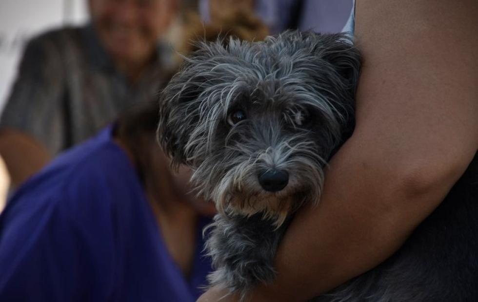 Por el clima, suspenden operativo de Mascotas Saludables en barrio Loma Linda