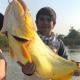 Río Paraná: un nene correntino capturó un dorado gigante y lo devolvió