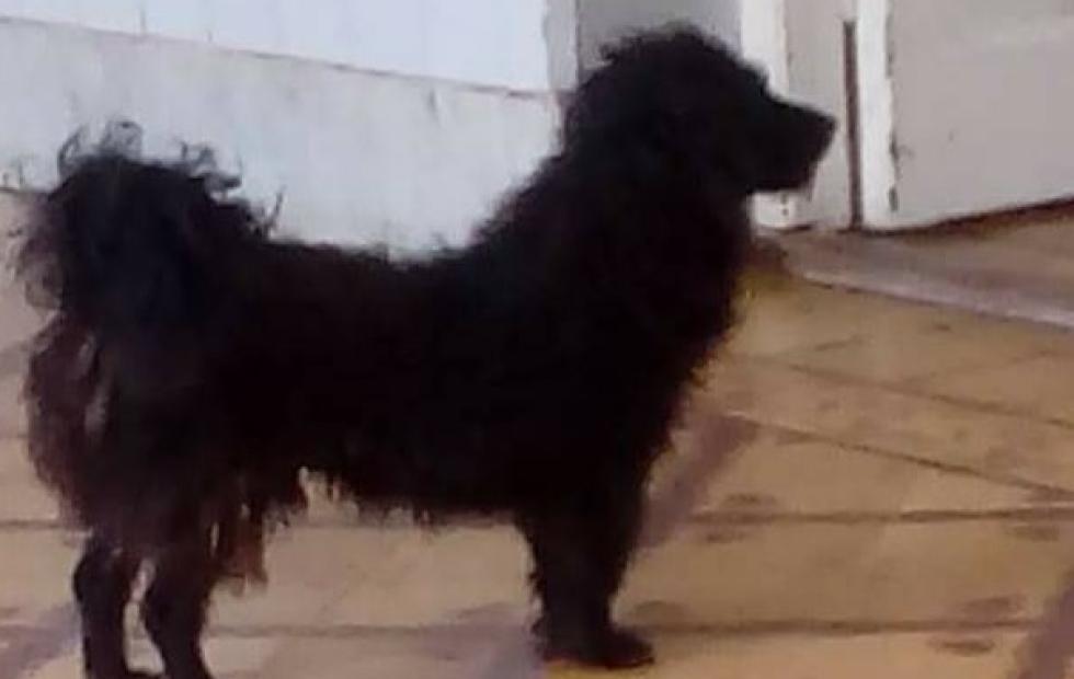 """Corrientes: """"Patán"""", el perro fiel que esperó en el hospital a su dueña que terminó falleciendo"""