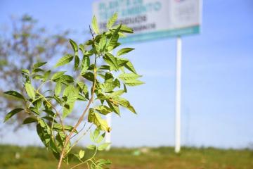 plantación-plata-de-residuos-1-768x512.jpg