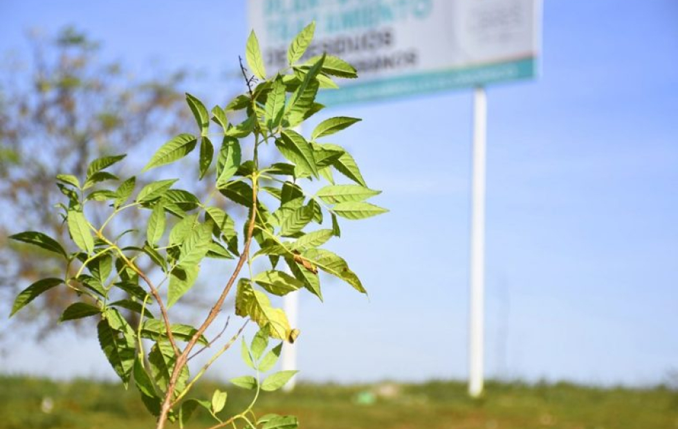 Paso de los Libres: El municipio plantó 20 guarán en la Planta de Tratamiento de Residuos