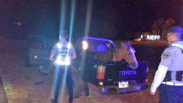 Insólito: Violó la cuarentena ebrio para llevar su caballo a una curandera