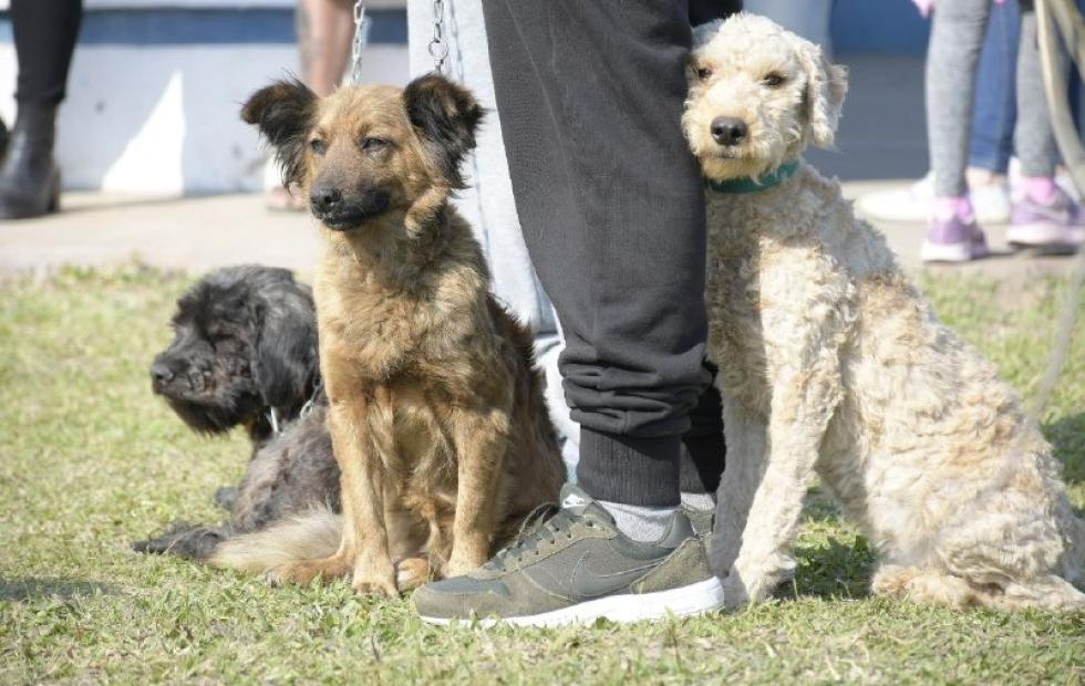 La Municipalidad reglamentó la ordenanza que establece los horarios para pasear perros sin correa