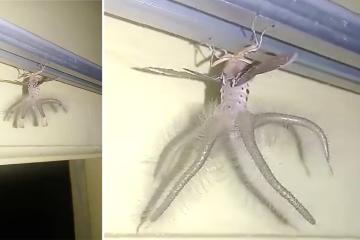 Bizarre Alien Like Creature In Bali