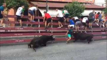 Escalofriante cogida de dos vacas a un joven en el encierro de Moratalla , Murcia