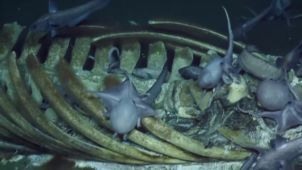 ballena-cae-al-fondo-del-mar.jpg