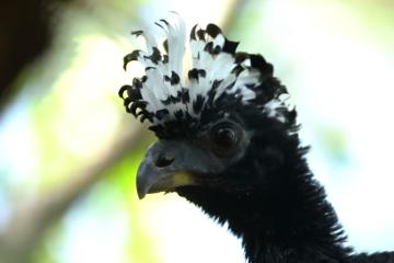 Increíble video: Una rara especie de ave volvió al Parque Iberá