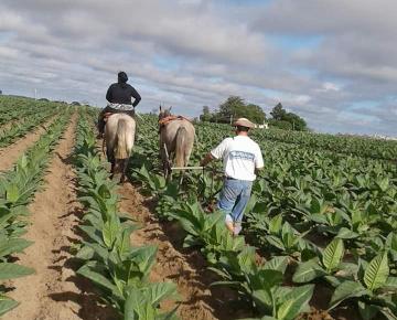 Goya: Por fondos adeudados, productores tabacaleros realizarán corte de ruta