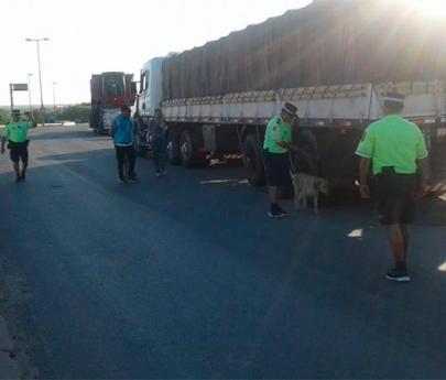 Entre Rios: Un camionero brasileño arrestado con 1200 kilos de marihuana que ingresó por Misiones