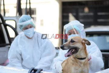 perro coronavirus 1