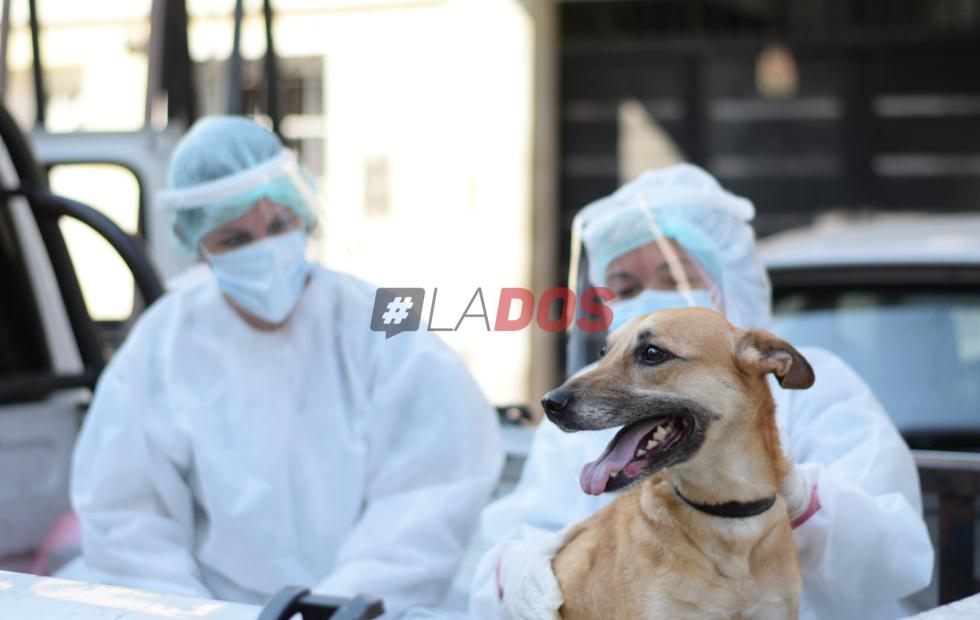 Coronavirus en Corrientes: rescataron a una perrita que había quedado sola en un domicilio aislado