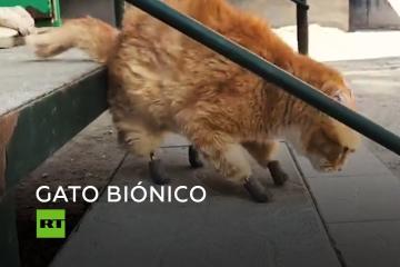 Un gato vuelve a andar gracias a unas patas de titanio