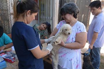 mascotas saludables 1.jpg