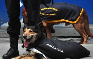 """La historia del perro policía Corbata: """"Fue un amigo, un hijo y un maestro"""""""