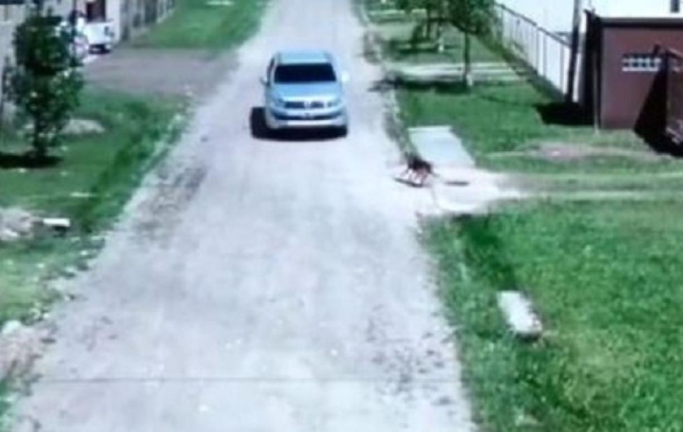 Un fiscal denunciará penalmente al conductor que atropelló y mató a un perro