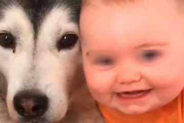 """Video viral: El bebé y su perro protagonizan el Tik Tok """"más bello del mundo"""""""