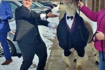 mendl-weinstock-with-wedding-llama.jpg