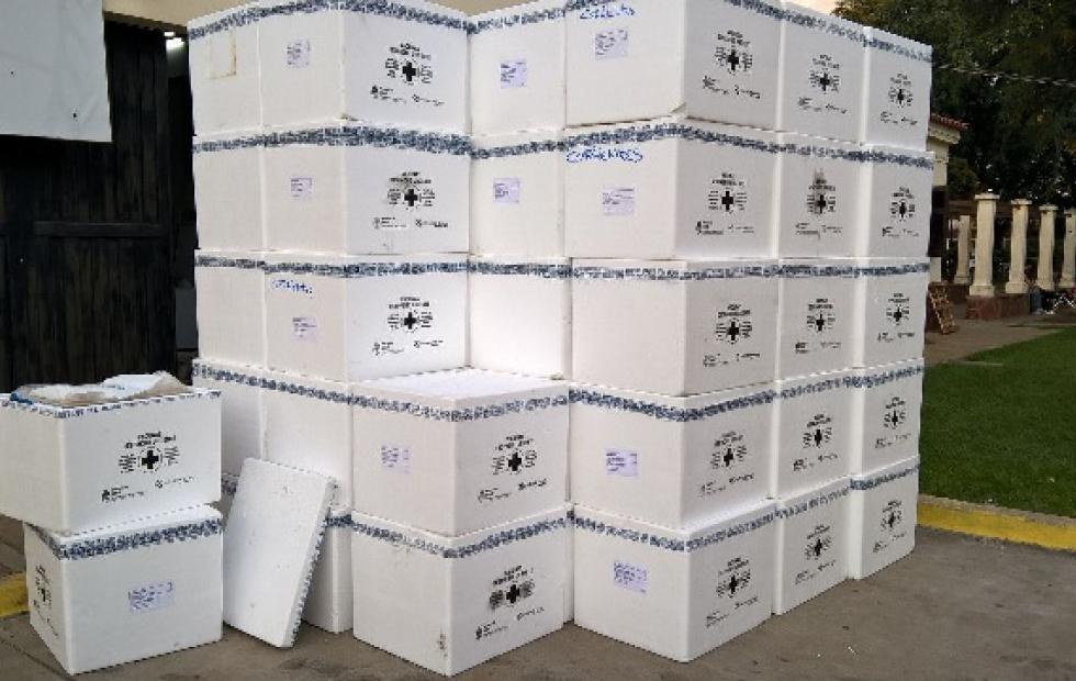 Corrientes: Salud Pública confirmó que llegaron las vacunas antigripales