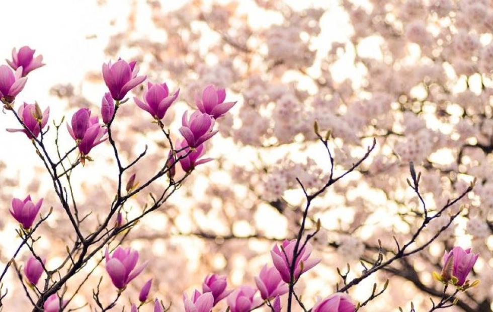 Porqué la primavera se retrasa y no comenzará el 21 de septiembre