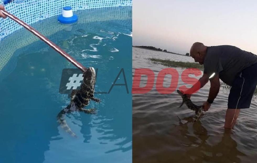 Corrientes: hallaron un yacaré en una pileta cuando un nene iba ingresar al agua