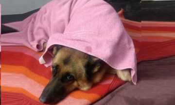 perro frio.jpg