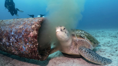 Sea Turtle Feeds On Pollution From Underwater Pipe