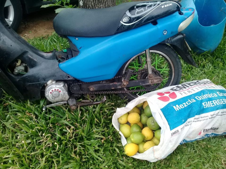 robo limones.jpg
