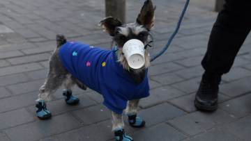 perros-china-cuidado-wuhan.jpg
