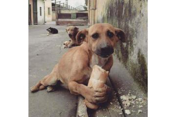 perro callejero.png
