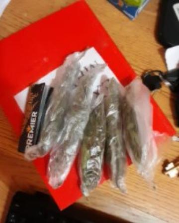 hojas de marihuana Santa Rosa