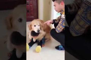Como el Perro defiende al niño