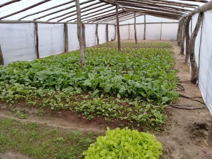 Verduras de agricultores goyanos.jpg