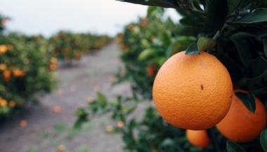 citricos.jpg