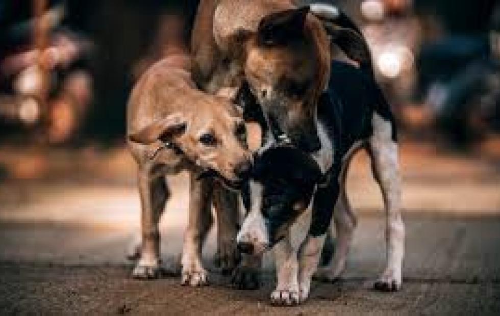 Condenan a prisión a una mujer por alimentar gatos y perros callejeros