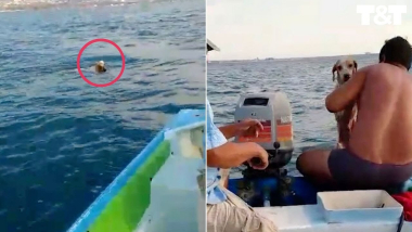 Heroic Rescuers Sail Out to Save Puppy Caught in Rip Tide
