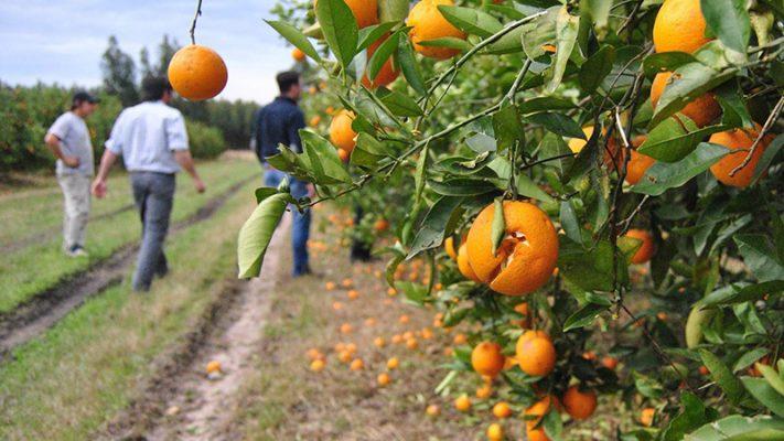 citricos emergencia.jpg