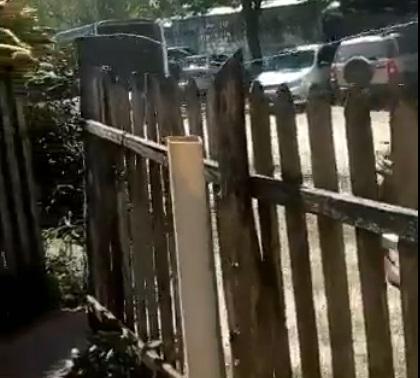 riña de gallos.jpg
