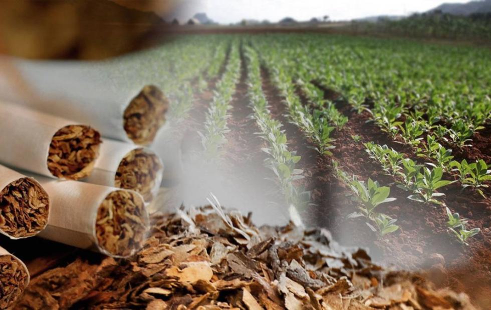 No sé fuma más: La crisis mundial del tabaco pone en peligro 300 empleos en Corrientes