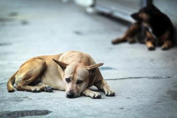 Historia viral: Joven vende frutas y verduras para ayudar a perros callejeros