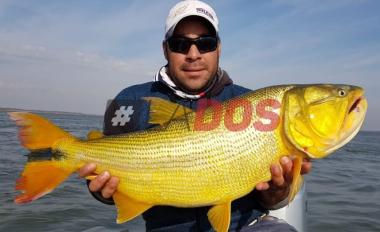 Dorado pesca 1