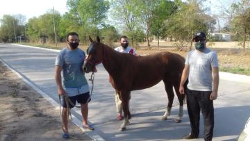 caballo recuperado.jpg