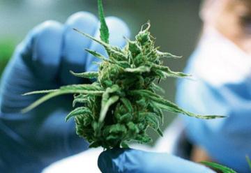 cannabis-medicinal-legislacion-sorda-805514.jpg